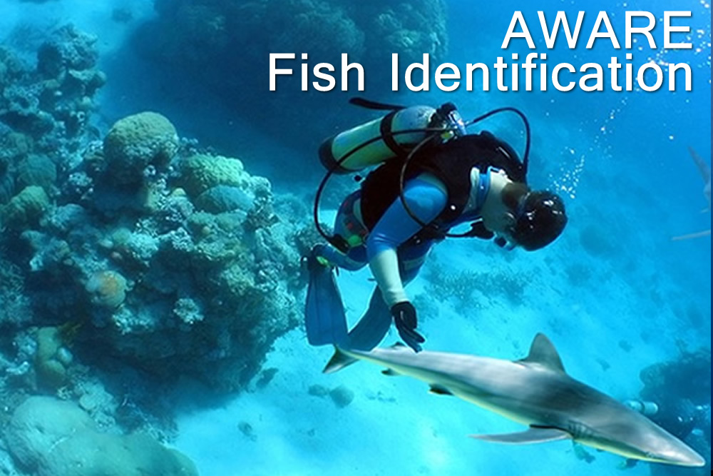 Aware - Fish Identification - Escola de Mergulho
